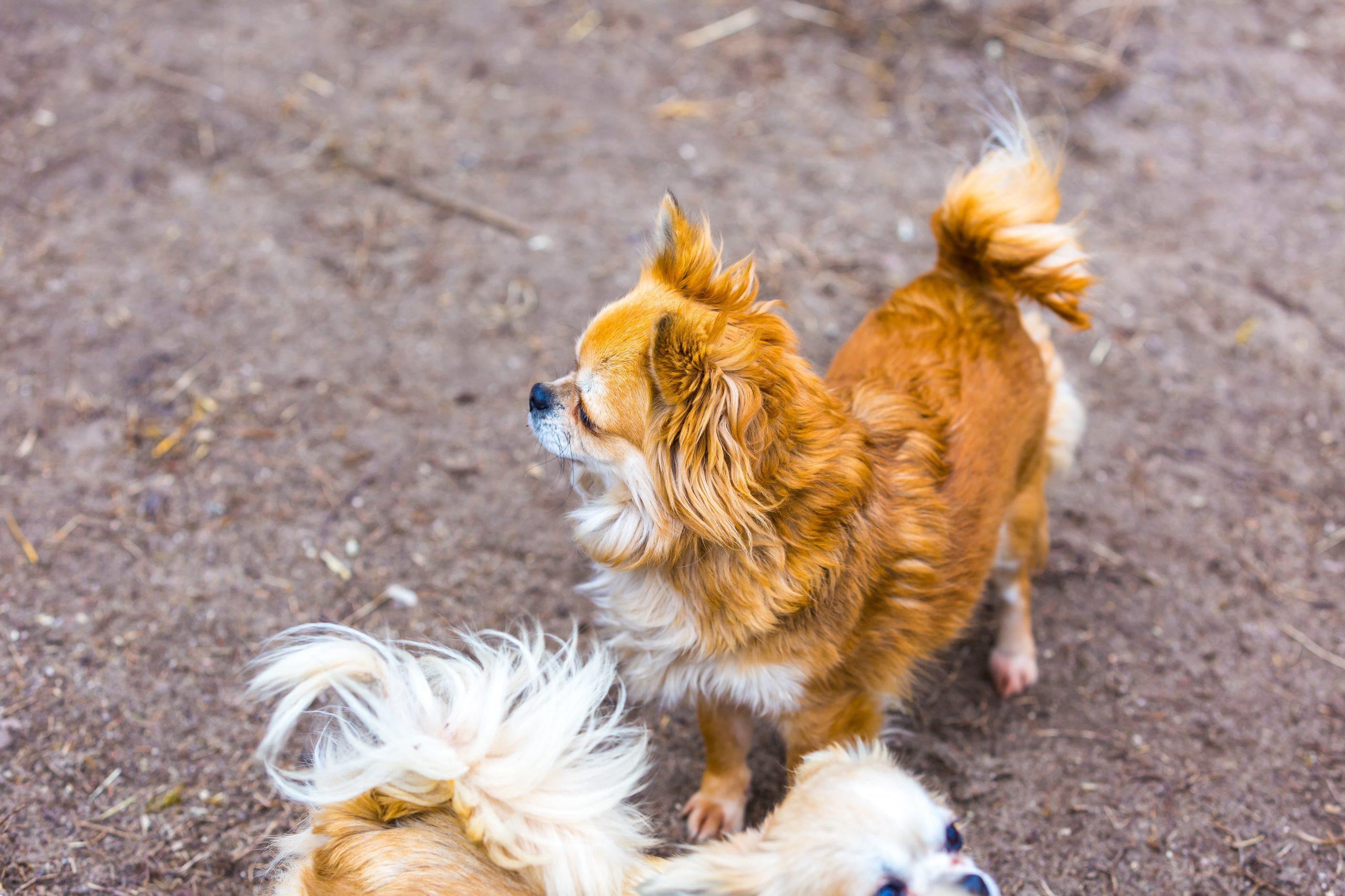 comportement chien