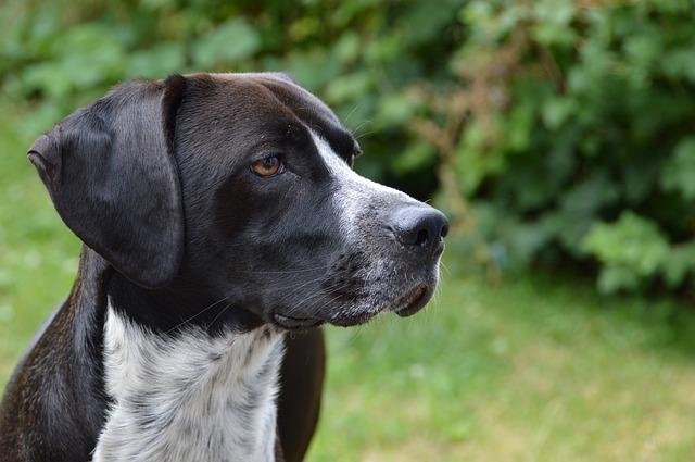 tarif dressage pour chien