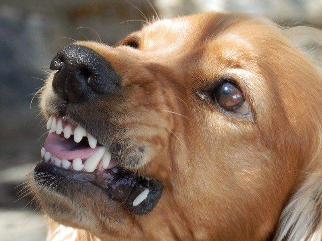 chien agressif que faire