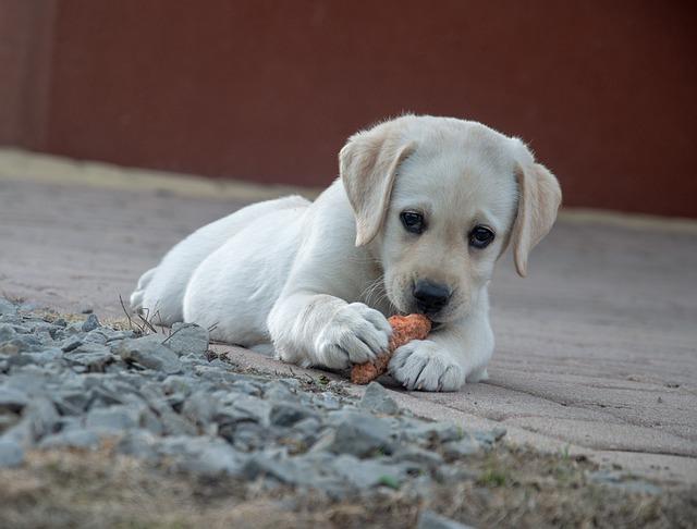 meilleure nourriture chien