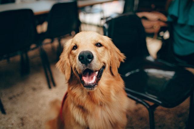 repas maison pour chien